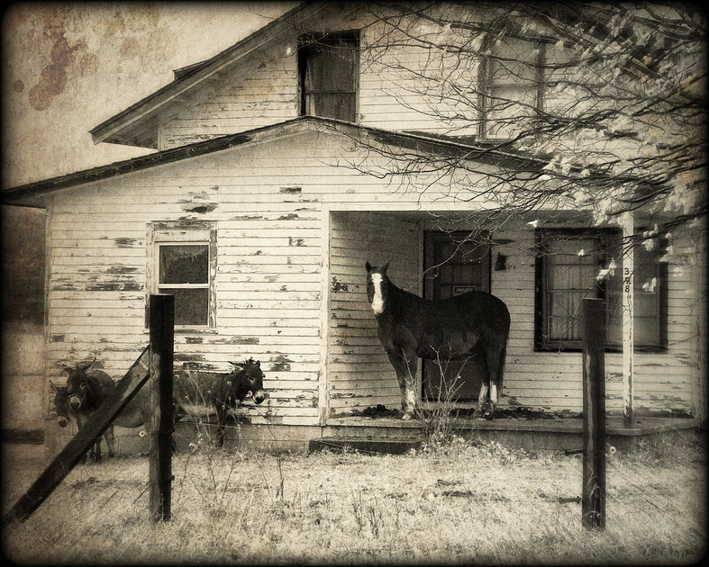 Horse on the Porch